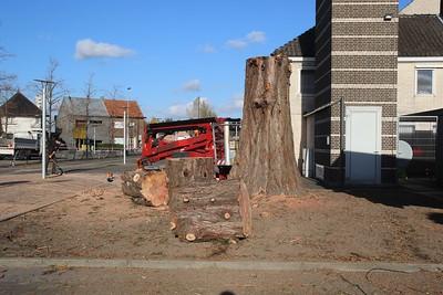 20181108 Verwijdering Mammoetboom Gemeentehuis