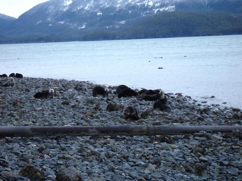 Alaska 2008 063.jpg