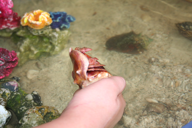 Coshocton Undersea Life (12).JPG
