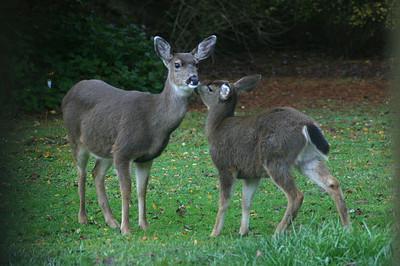 Terrestrial critters