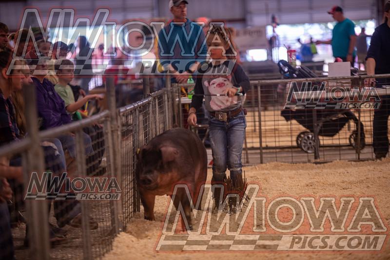 Open Hog Show - 9-8-19 - CCF