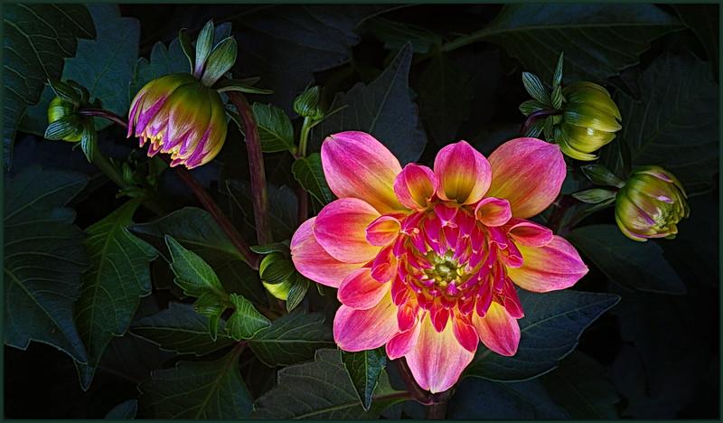 121.Neale Jenks.1.From bud to bloom in seven steps.jpg