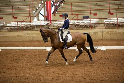 Horse 489