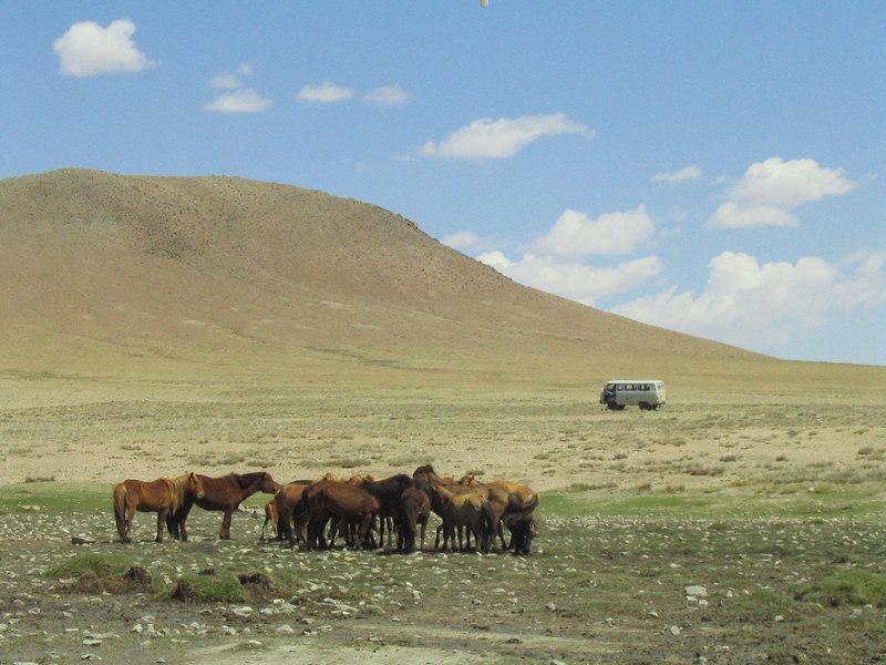 Wild horses and wild Russian van.