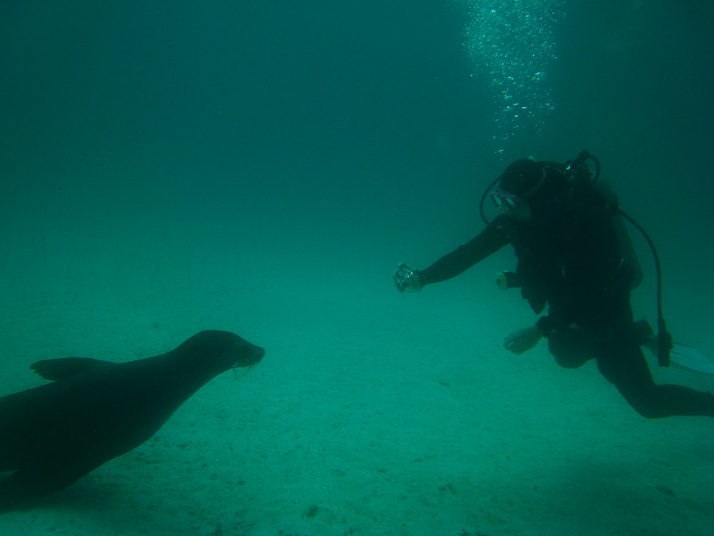 Diving in the Galapagos (116 of 392)