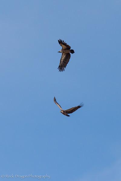 North_Serengeti-4.jpg
