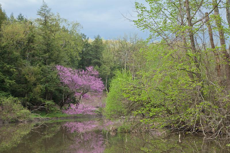 Spring13-0495.jpg