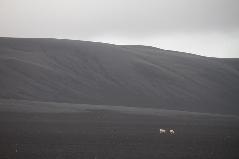 2014 ICELAND-135.jpg