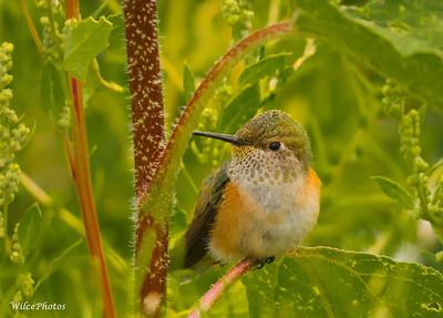 Birds, Northern Arizona