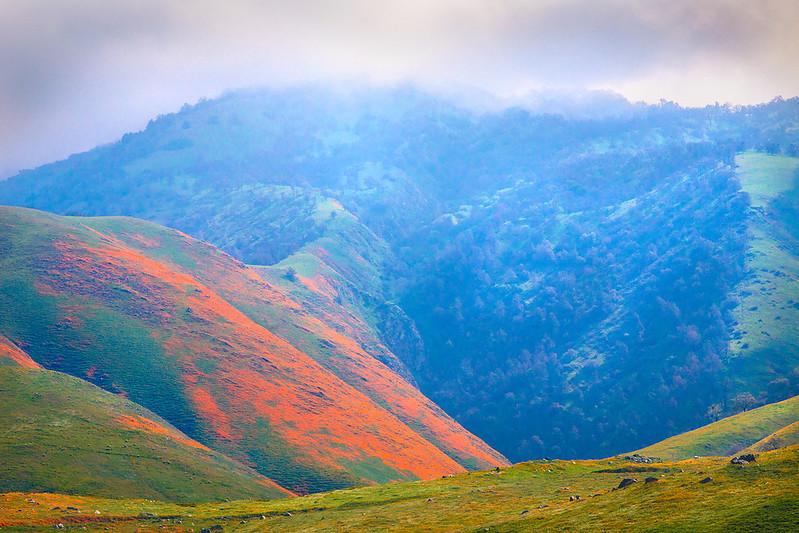 Bear_Mountain_Wildflowers_Southern_California_Oak_Hills_MG_2054-2b.jpg