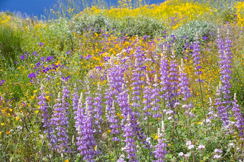 Spring Flowers B-157.jpg