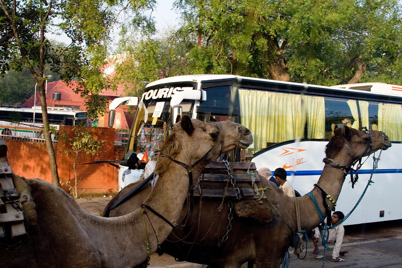 Camels and Busses.jpg