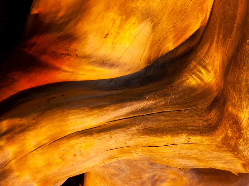 Driftwood, James V. Fitzgerald Marine Reserve, California, 2005