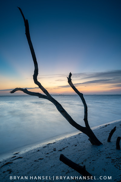 Sanibel Driftwood 5