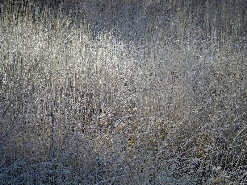 Grass is still frosty as the sun starts to hit it.