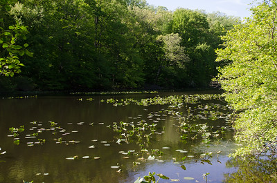 Watchung Reservation 5/14/13