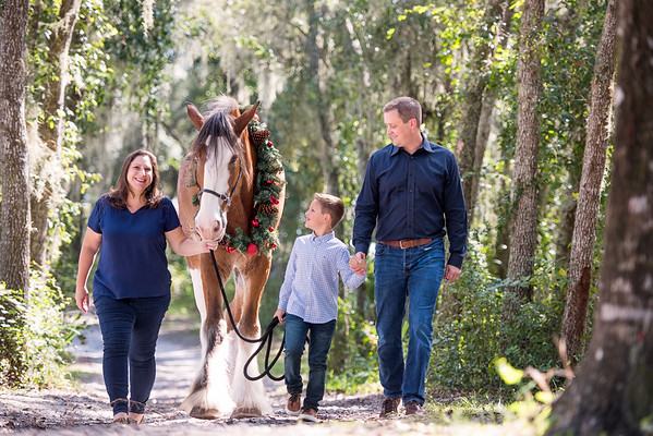 Clydesdales October 2019 - Moser
