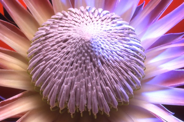 Flower35mm-Portfolio023.jpg