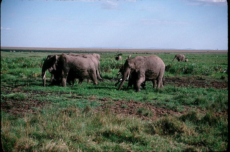 Kenya2_081.jpg