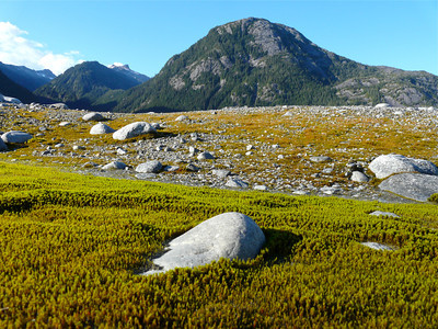 Alaska: Baird Glacier