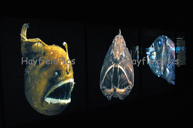 Oceanography Fish & Ships 10/26/06