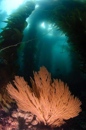 Catalina Island - Blue Caverns, Seafan Grotto, Rock Quarry (Magician Dive Boat) 09-05-11