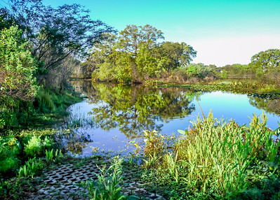 2016-03-30  Alligator Creek  Kapok Park  Clearwater,Fl.