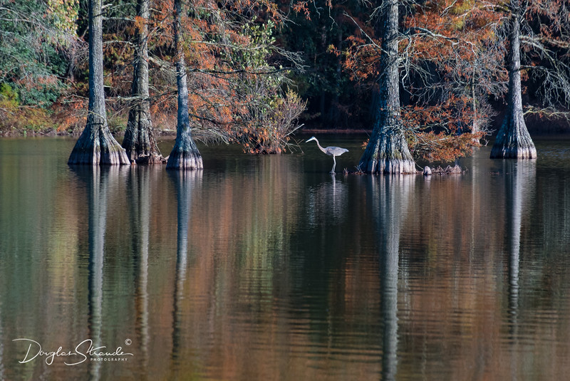 0076-Trap Pond SP.jpg
