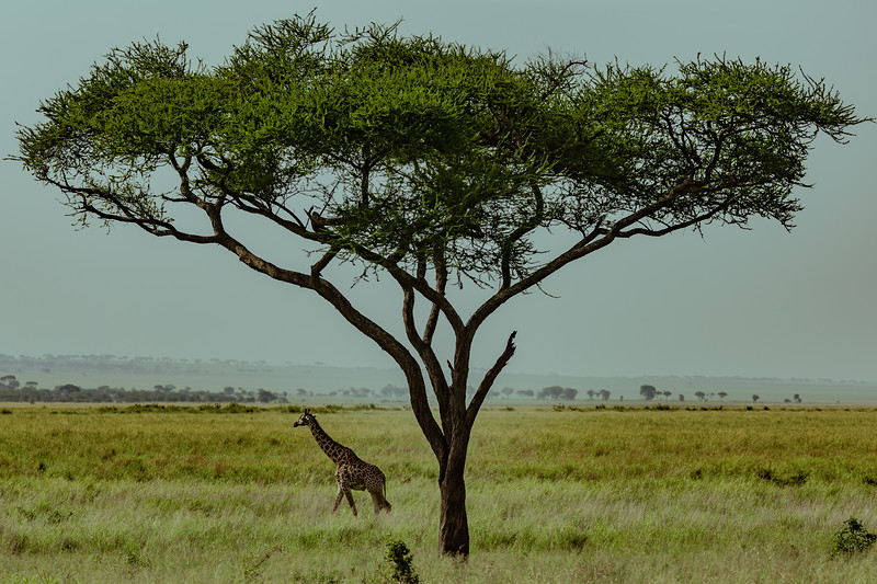 1802_Tanzania031.jpg