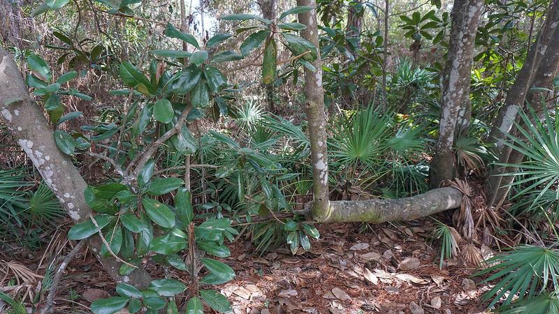 Apalachicola Reserve