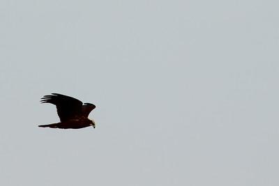 Birding, organised by trip