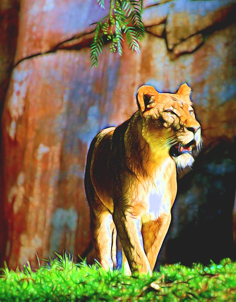 T_Lady Lion.jpg