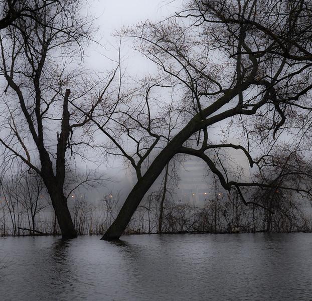 04-07-2020-fog-4.jpg