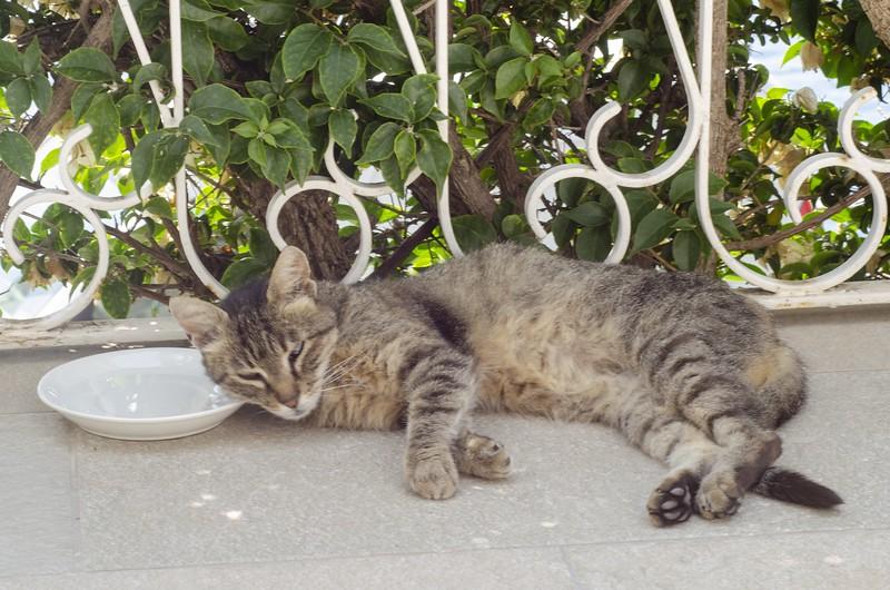 Positano apartment gatto