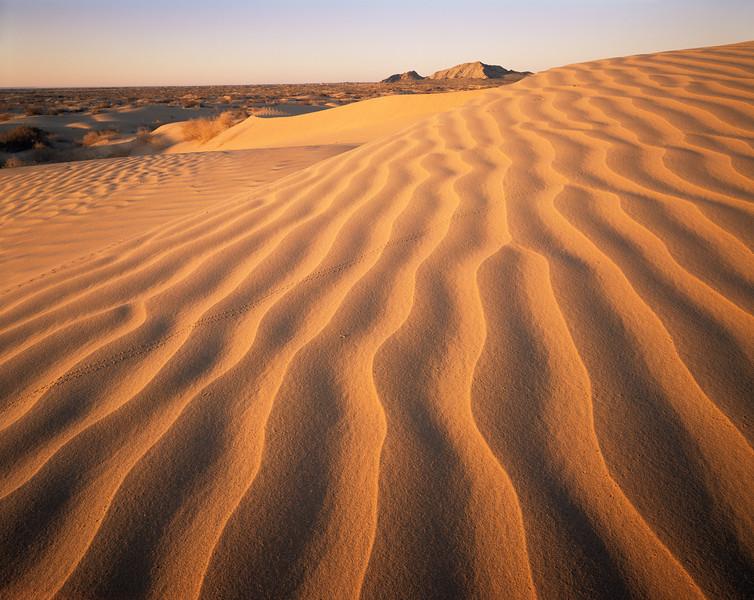Grand Desierto, Sierra, MEX/Enterrada buried in sand with beetle tracked dunes foregound.289h  xc