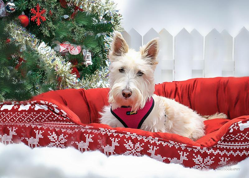 Christmas Pets Nov 2018