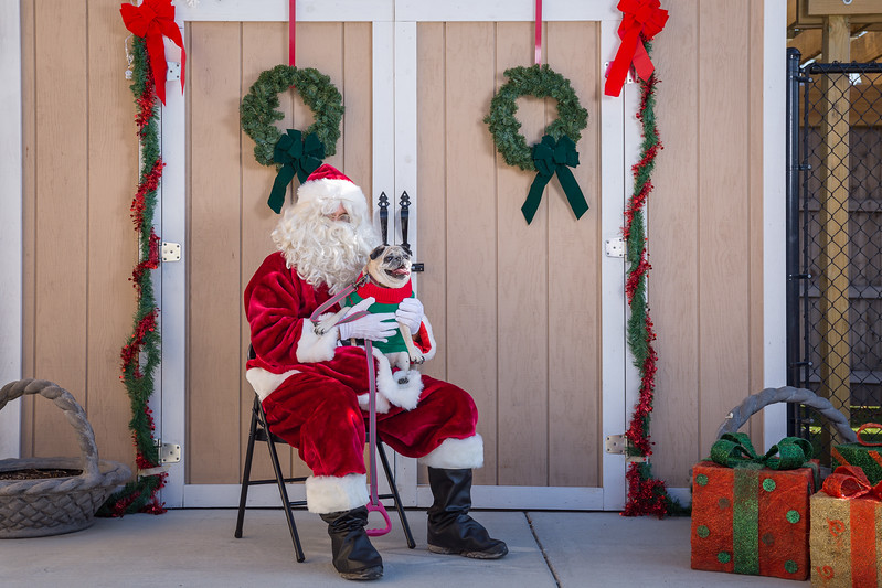 Pet Pictures With Santa-31.jpg