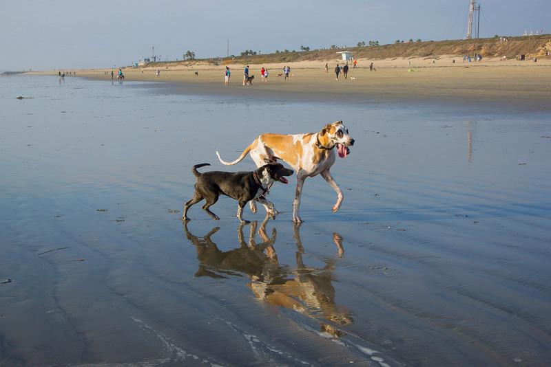 dogs_beach-29.jpg