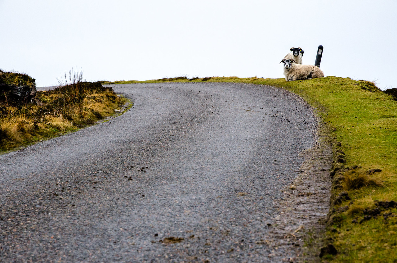 NC500 - Applecross - Guarding the road to Red Point