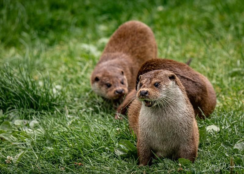 British Wildlife Centre_D850-0098.jpg