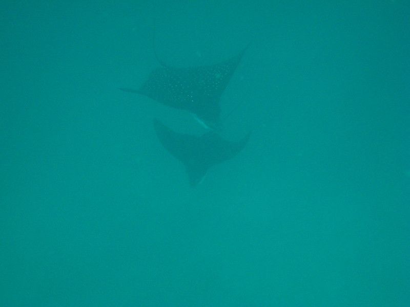 Diving in the Galapagos (269 of 392)