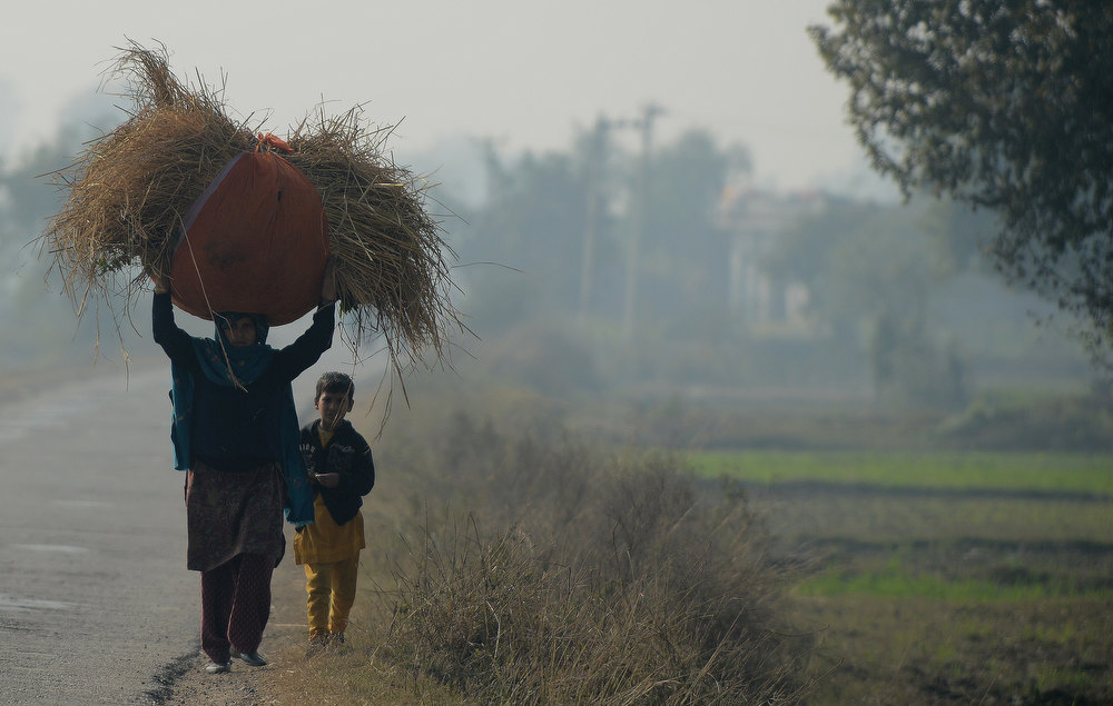 ". An Indian woman carries grass near the India-Pakistan border in Suchit-Garh, 36 kms southwest of Jammu, on January 11, 2013. Pakistan summoned the Indian ambassador to protest against ""unacceptable and unprovoked\"" attacks by the Indian army that killed two Pakistani soldiers in five days in Kashmir. TAUSEEF MUSTAFA/AFP/Getty Images"