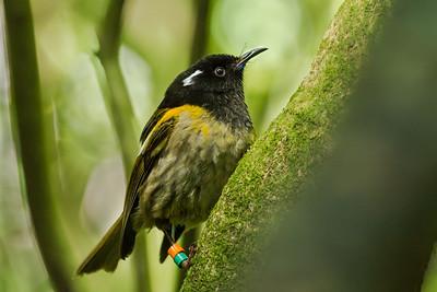 Stitchbirds