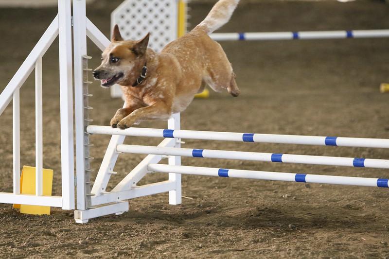 3-10-2019 Bloodhound-9119.jpg