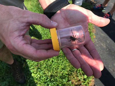 Seeing a spider's world at Wolf Creek Environmental Center