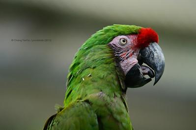 Bird's portrait (color version)