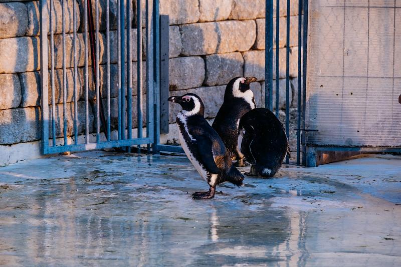 Tonis Zoo-0401.jpg