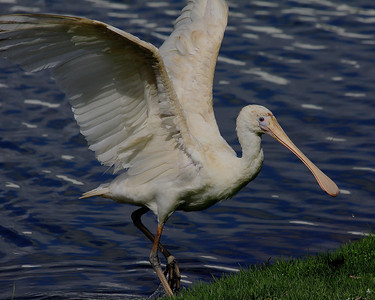 Birds of Southwestern Australia