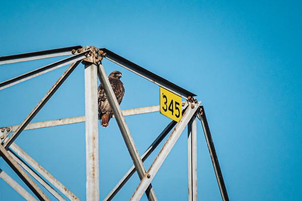 Hawks January '21