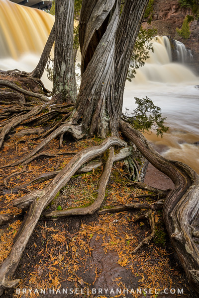 Roots and Falls